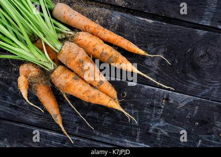 Freshly harvested bunch of carrots on rustic dark wood from above. Space for text. - Stock Photo