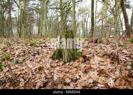 Rotting tree stump covered in fungus stock photo royalty for What is a tree trunk covered with 4 letters