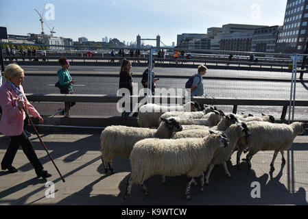 London Bridge, London, UK.  24th September 2017. Celebrity chef Mary Berry. The annual Sheep Drive across London - Stock Photo