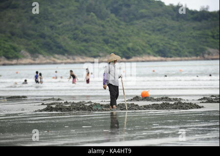 HONG KONG,HONG KONG SAR,CHINA. 13th July 2011.Cockle farmers on the popular tourist beach of Pui O beach, Lantau - Stock Photo