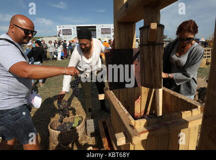 Crimea, Russia. 30th Sep, 2017. People prepare to stomp grapes at the WineFest grape harvesting and wine making - Stock Photo
