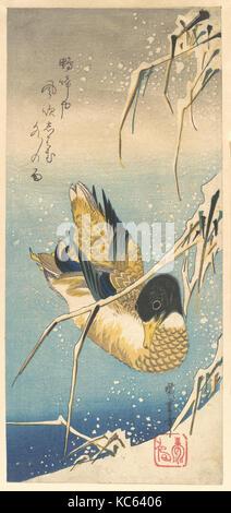 歌川広重画 雪中芦に鴨, Mallard Duck and Snow-covered Reeds, Utagawa Hiroshige, ca. 1832 - Stock Photo