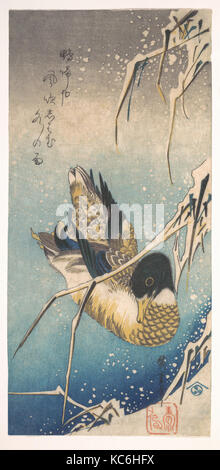 Mallard and Snow-covered Reeds, 歌川広重画 雪中芦に鴨, Edo period (1615–1868), ca. 1843, Japan, Polychrome woodblock print; - Stock Photo