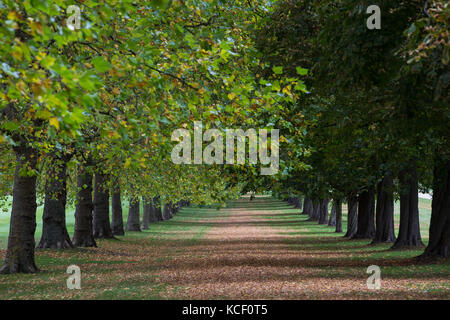 Windsor, UK. 4th October , 2017. Autumn colours alongside the Long Walk in Windsor Great Park. Credit: Mark Kerrison/Alamy - Stock Photo
