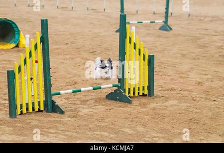 Agility Dog Association Of Australia