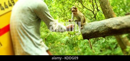Young boy feeding a small monkey . - Stock Photo