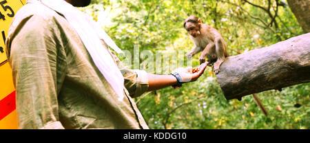 Young man feeding a small monkey - Stock Photo