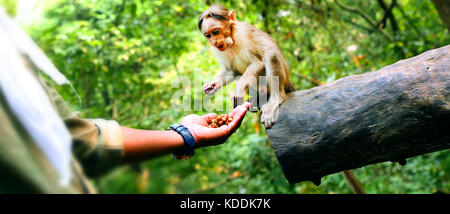 Man feeding a small monkey - Stock Photo