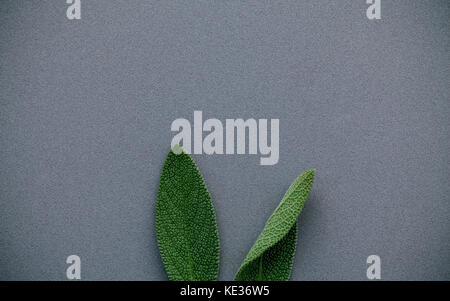 Easter bunny ears made from sage leaves . Minimal easter concept on gray background with flat lay and copy space. - Stock Photo