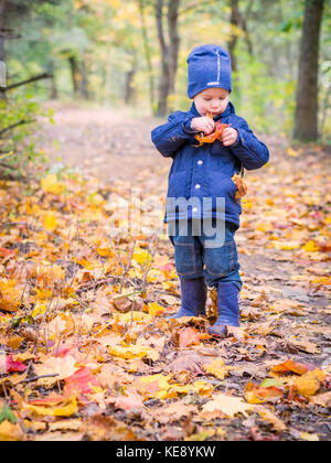 Boy picking up leaves in autumn in the forest - Stock Photo