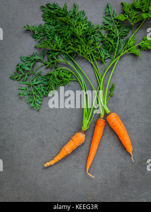 Fresh carrots bunch on dark concrete background. Raw fresh carrots with tails. Fresh organic carrots with leaves. - Stock Photo