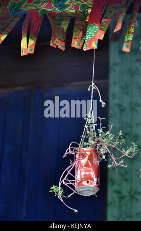 Plant growing in a soda can hanging below Chinese bunting - Stock Photo