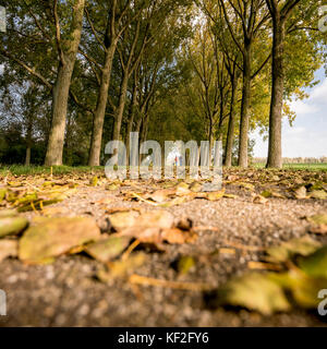 People walking on the cycle path lined with trees as leaves fall and cover the track - Stock Photo