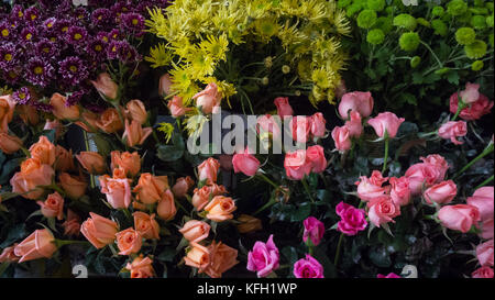 shot of colorful flowers - Stock Photo