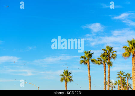 Seagulls flying over palm trees in California, USA - Stock Photo