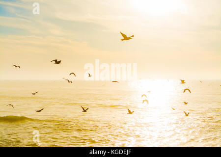 Seagulls flying over the sea at dusk. California, USA - Stock Photo