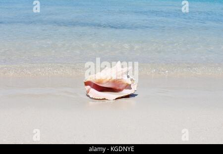 Conch shell on sand beach with sea waves background copy space - Stock Photo
