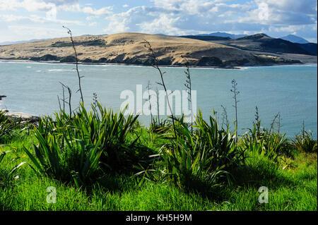 View of the Arai-Te-Uru Recreation Reserve south end of Hokianga harbour, Westcoast Northland, North Island, New - Stock Photo