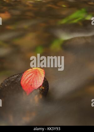 Thorny raspberry leaf caught on wet stone. A leaves trapped in the middle of a mountain stream. - Stock Photo