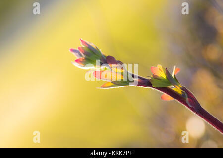 Isolated colorful leaf - Stock Photo