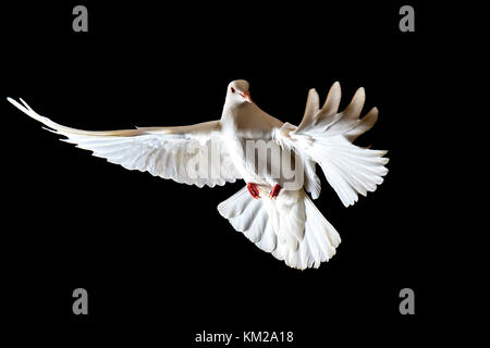 white dove fist symbol red over