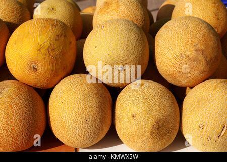 Galia yellow melon Cucumis Melo Reticulatus stacked rows in market - Stock Photo