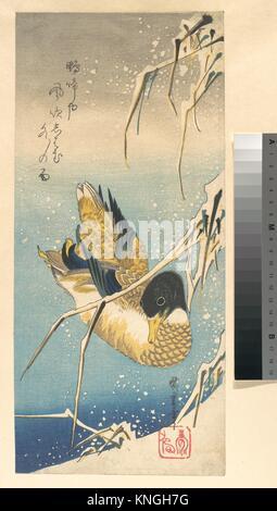 歌川広重画 雪中芦に鴨/Mallard Duck and Snow-covered Reeds. Artist: Utagawa Hiroshige (Japanese, Tokyo - Stock Photo