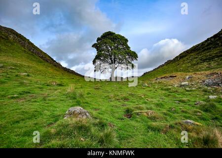 Sycamore Gap, Hadrian's Wall, near Homesteads, Northumberland, England, United Kingdom - Stock Photo