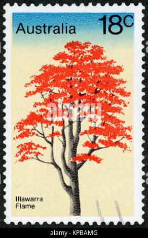 AUSTRALIA - CIRCA 1978: A stamp printed in Australia shows Illawarra Flame Tree, Brachychiton Acerifolius, Tree - Stock Photo