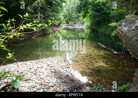 Australian forest in the tropical area northern territory for Diwan queensland