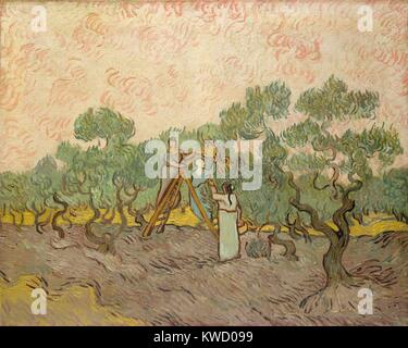 Women Picking Olives, by Vincent Van Gogh, 1889, Dutch Post-Impressionist, oil on canvas. Of the three versions - Stock Photo