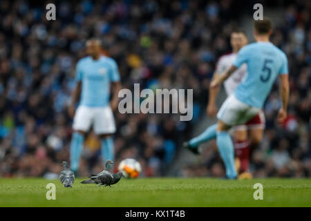 Manchester, UK. 06th Jan, 2018. Pigeons on the pitch during the FA Cup Third Round match between Manchester City - Stock Photo