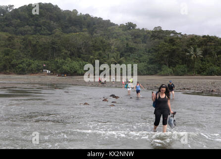 Tourist wading in ocean to boat - Stock Photo