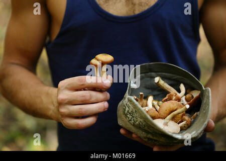 Forest Mushrooms in farmer's hands - Stock Photo