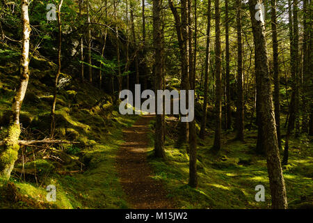 Culag Woods, Lochinver - Stock Photo
