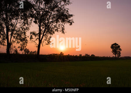 Beautiful sunset and sky background over the rice field in the countryside of Thailand. - Stock Photo