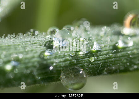a drop, abstract, background, bright, clean, color, dew, drop, fresh, green, leaf, life, light, macro, natural, - Stock Photo