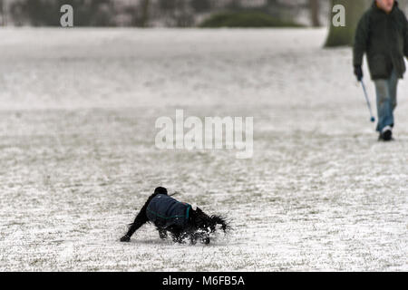 Melton mowbray 3rd March 2018: Blizzards batter the UK extreme snow many parts of the UK lone runner, dog walker, - Stock Photo