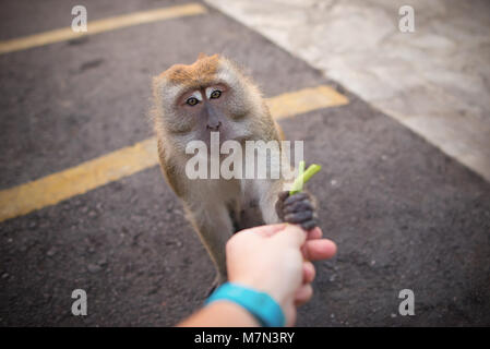 Man hand feeds a monkey. Friendship between human and animal - Stock Photo
