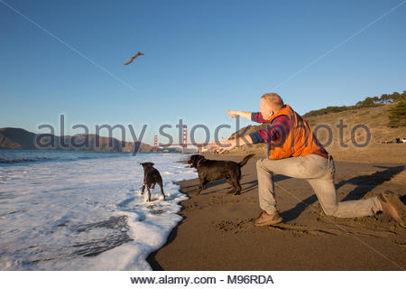 Red-haired man kneeling in sand after throwing stick into water on beach for his two brown labrador retrievers - Stock Photo