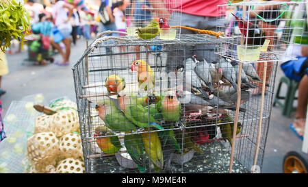Multicolored parrots in a cage. Sale of parrots in the local Philippine market. - Stock Photo