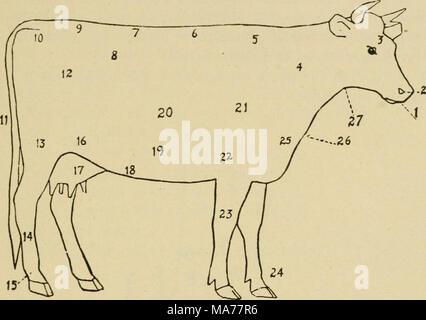 Thigh Diagram Cow Electrical Work Wiring Diagram