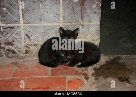 Two black dirty little kitten sitting on the street near the house. - Stock Photo