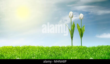 Studio shot of two tulips planted on green grass line against a sunny sky. Ecological concept. - Stock Photo