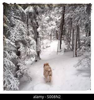 Nita on Cooper Kiln Trail - Stockfoto