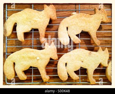 Dog shaped biscuits - Stock Photo