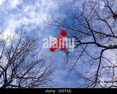 white and red balloons caught in the bare branches of a tree in winter - Stock Photo