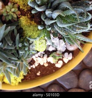 Planter of succulent plants. - Stock Photo