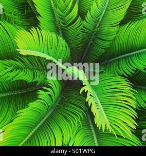 Palm tree close up - Stockfoto