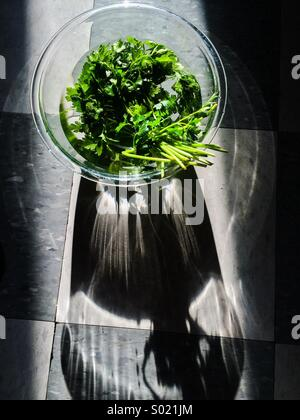 Parsley in sunlight - Stock Photo